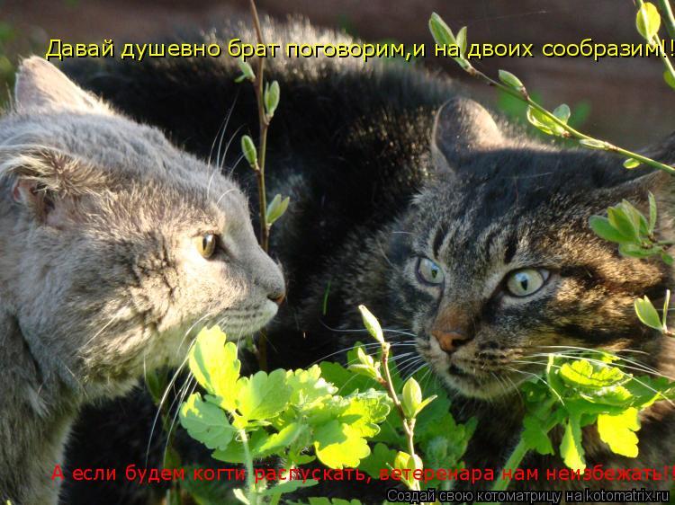 Котоматрица: Давай душевно брат поговорим,и на двоих сообразим!!    А если будем когти распускать, ветеренара нам неизбежать!!