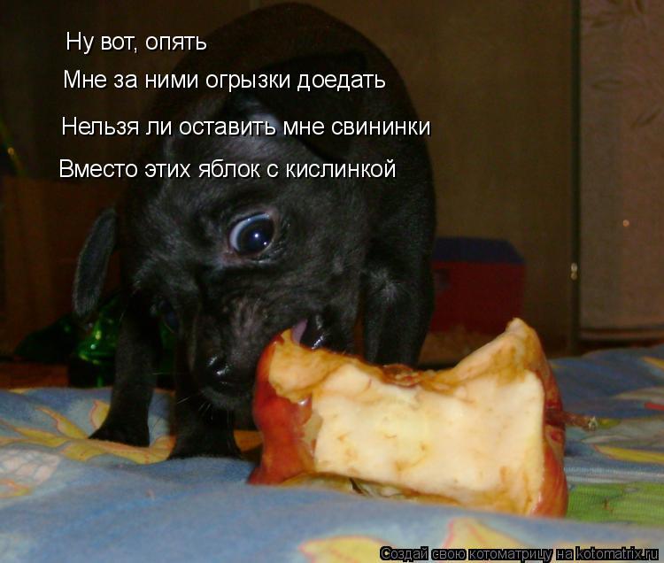 Котоматрица: Ну вот, опять Мне за ними огрызки доедать Нельзя ли оставить мне свининки Вместо этих яблок с кислинкой