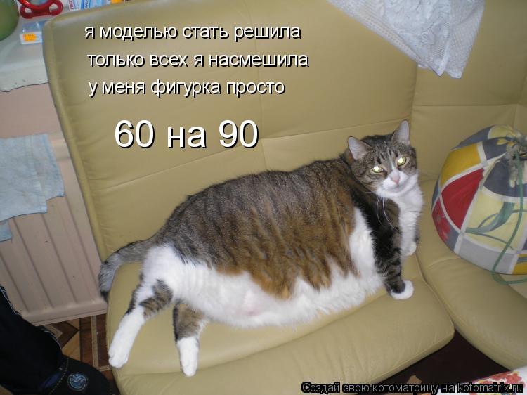 Котоматрица: я моделью стать решила только всех я насмешила у меня фигурка просто 60 на 90