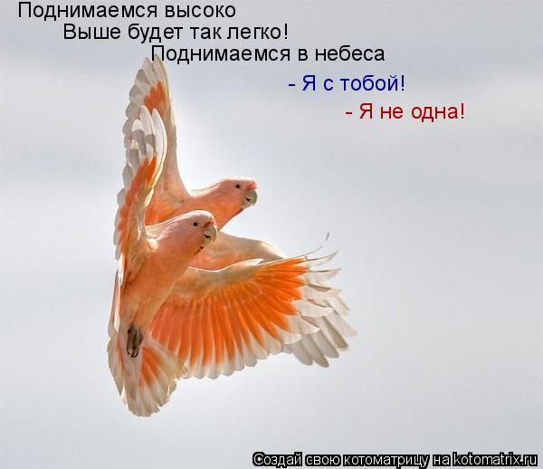 Котоматрица: Поднимаемся высоко Выше будет так легко! Поднимаемся в небеса - Я с тобой! - Я не одна!