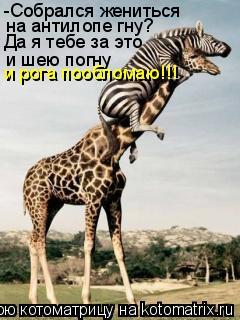Котоматрица: -Собрался жениться на антилопе гну? Да я тебе за это и шею погну и рога пообломаю!!!