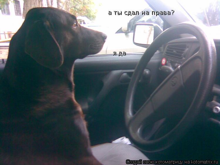 Котоматрица: а ты сдал на права? я да я да