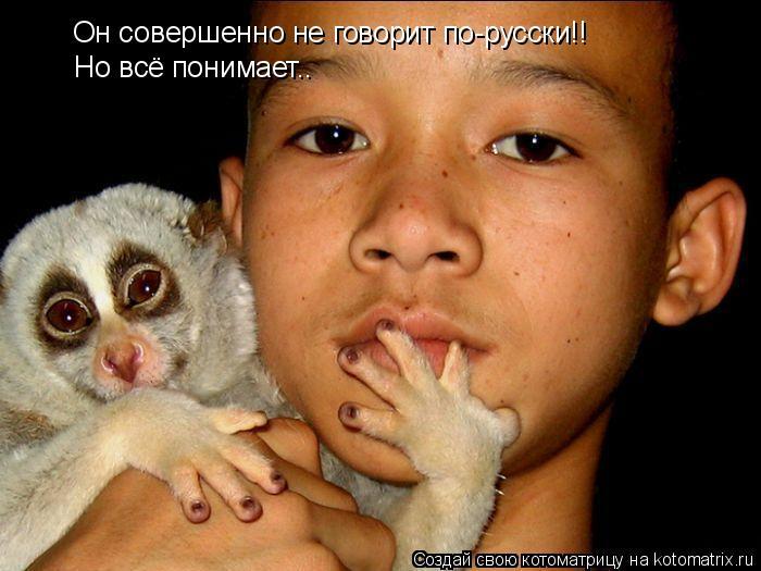 Котоматрица: Он совершенно не говорит по-русски!! Но всё понимает..