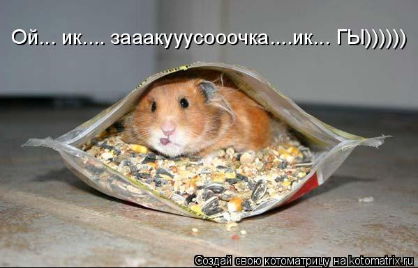 Котоматрица: Ой... ик.... зааакууусооочка....ик... ГЫ))))))