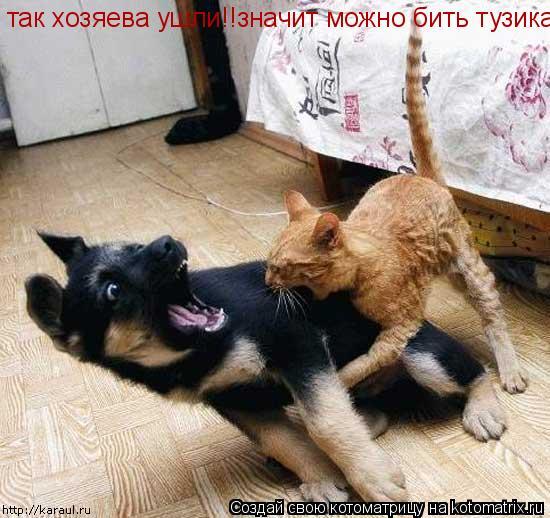 Котоматрица: так хозяева ушли!!значит можно бить тузика!!