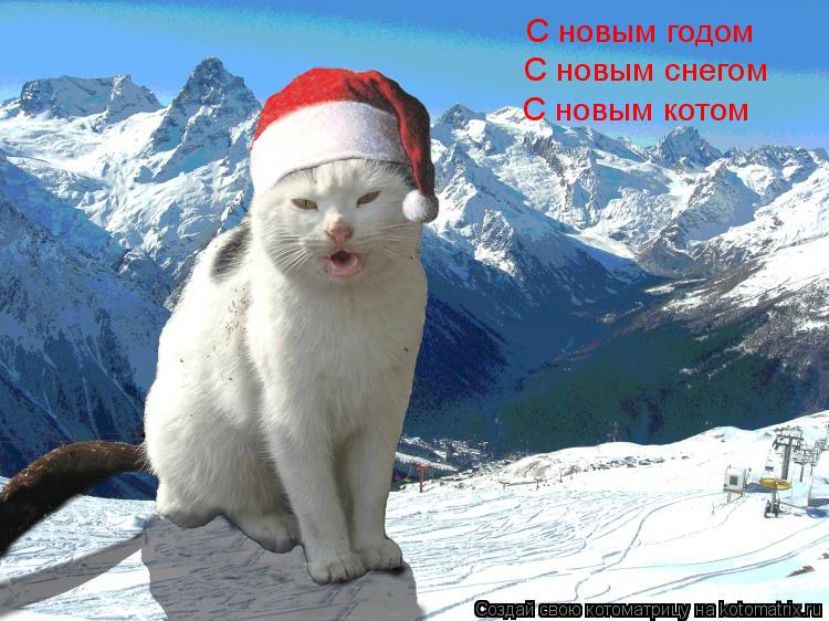 Котоматрица: С новым годом С новым снегом С новым котом