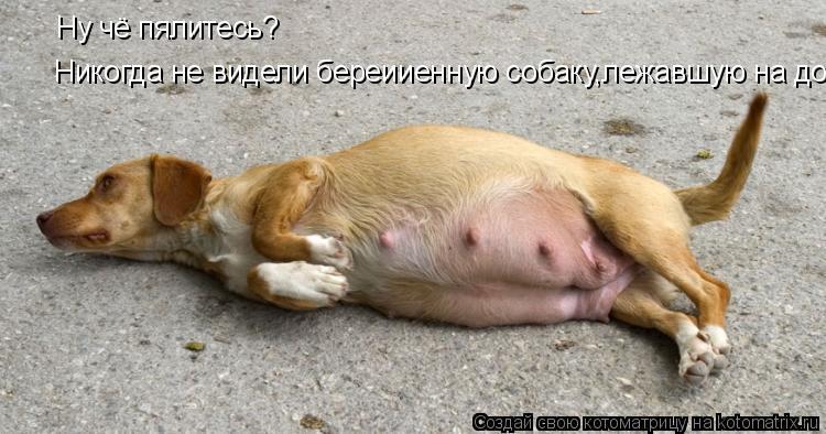Котоматрица: Ну чё пялитесь? Никогда не видели береииенную собаку,лежавшую на дороге?