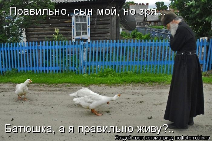 Котоматрица: Батюшка, а я правильно живу?.. - Правильно, сын мой, но зря...
