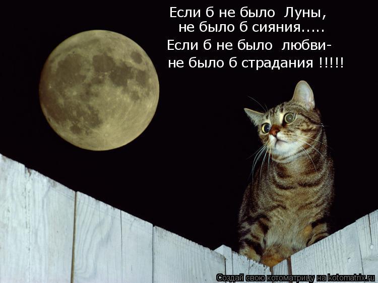 Котоматрица: Если б не было  Луны, не было б сияния..... Если б не было  любви- не было б страдания !!!!!