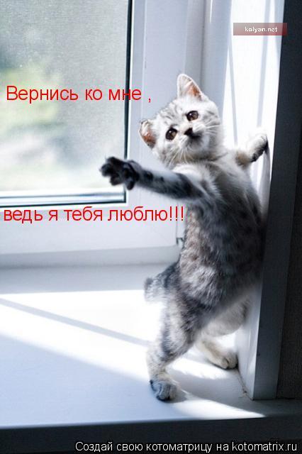 Котоматрица: Вернись ко мне , ведь я тебя люблю!!!