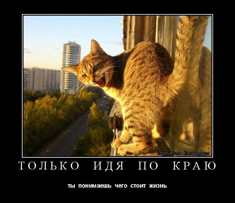 Котоматрица: только  идя  по  краю ты  понимаешь  чего  стоит  жизнь