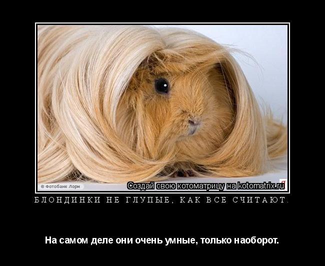 Котоматрица: Блондинки не глупые, как все считают. На самом деле они очень умные, только наоборот.