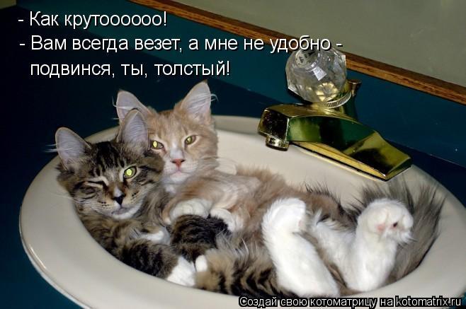 Котоматрица: - Как крутоооооо!  - Вам всегда везет, а мне не удобно -  подвинся, ты, толстый!