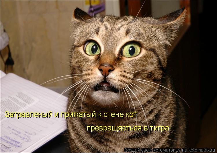 Котоматрица: Затравленый и прижатый к стене кот превращяеться в тигра