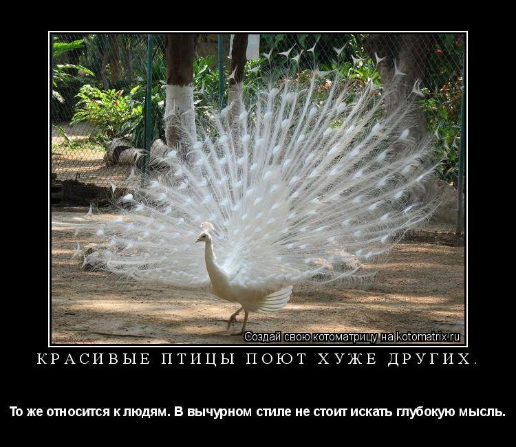 Котоматрица: Красивые птицы поют хуже других. То же относится к людям. В вычурном стиле не стоит искать глубокую мысль.