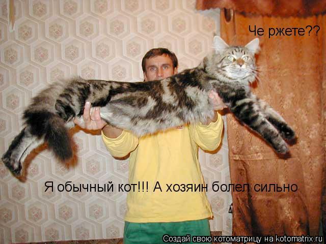 Котоматрица: Че ржете?? Я обычный кот!!! А хозяин болел сильно
