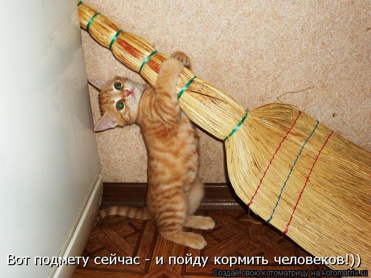 Котоматрица: Вот подмету сейчас - и пойду кормить человеков!))