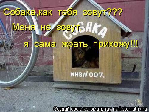 Котоматрица: Собака,как  тебя  зовут??? Меня  не  зовут, я  сама  жрать  прихожу!!!