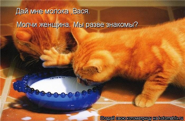 Котоматрица: Дай мне молока ,Вася. Молчи женщина. Мы разве знакомы?