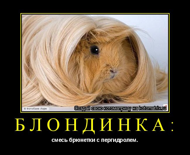 Котоматрица: Блондинка: смесь брюнетки с пергидролем.