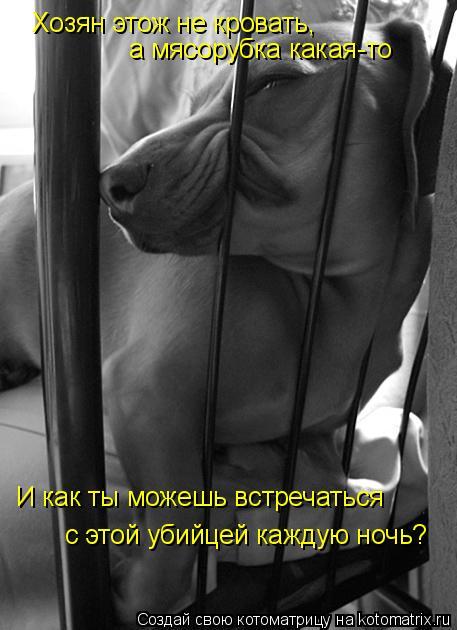 Котоматрица: Хозян этож не кровать,  а мясорубка какая-то И как ты можешь встречаться  с этой убийцей каждую ночь?