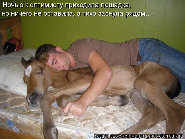 Котоматрица: Ночью к оптимисту приходила лошадка, но ничего не оставила, а тихо заснула рядом....