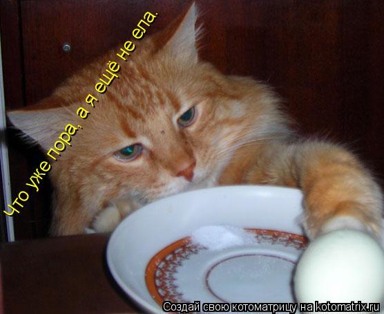 Котоматрица: Что уже пора, а я ещё не ела.