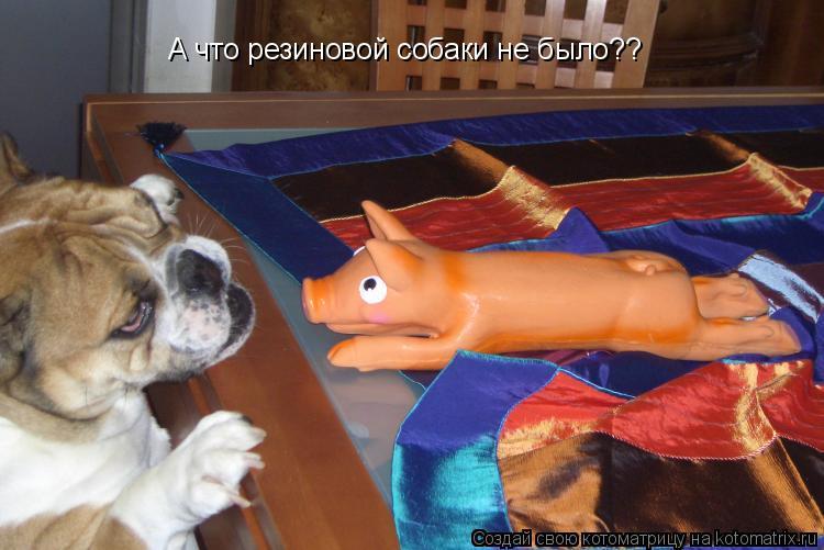 Котоматрица: А что резиновой собаки не было?? Или за свинью держите А что резиновой собаки не было??