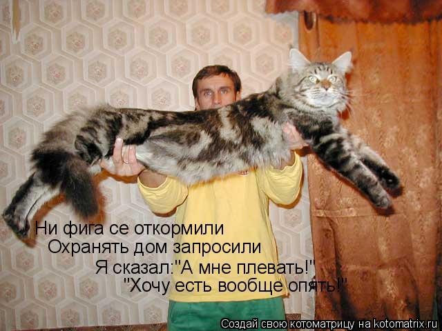 """Котоматрица: Ни фига се откормили Охранять дом запросили Я сказал:""""А мне плевать!"""" """"Хочу есть вообще опять!"""""""