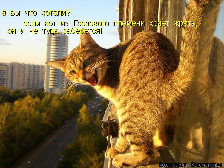 Котоматрица: а  вы  что  хотели?! если  кот  из  Грозового  племени  хочет  жрать, он  и  не  туда  заберется!