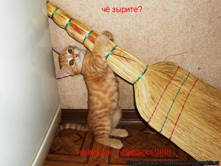 Котоматрица: чё зырите?   не видите , убираюсь!!!!!!!