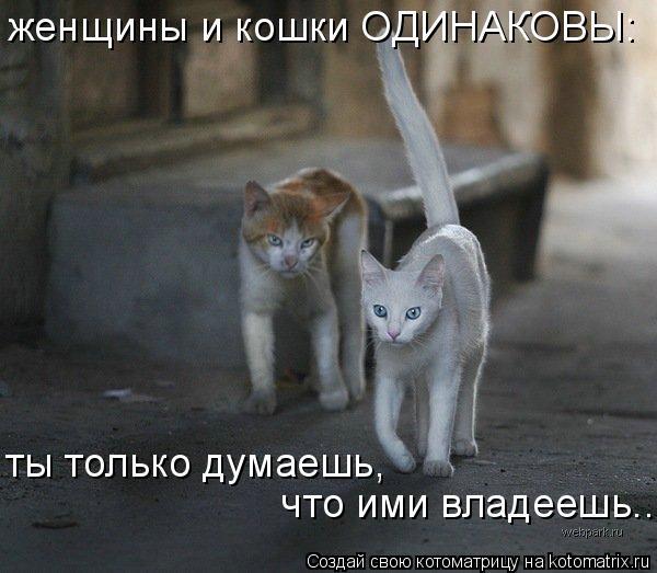 Котоматрица: женщины и кошки ОДИНАКОВЫ: ты только думаешь,  что ими владеешь..