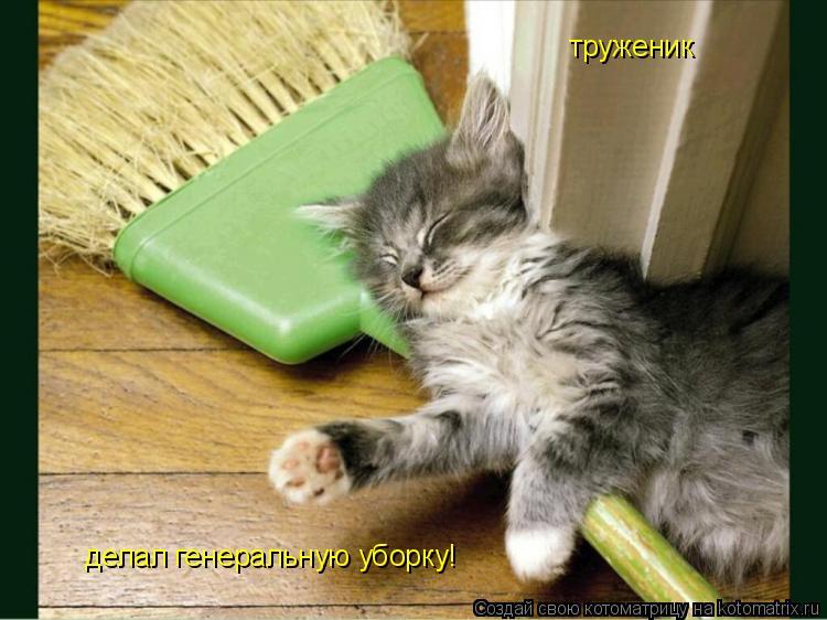 Котоматрица: труженик делал генеральную уборку!
