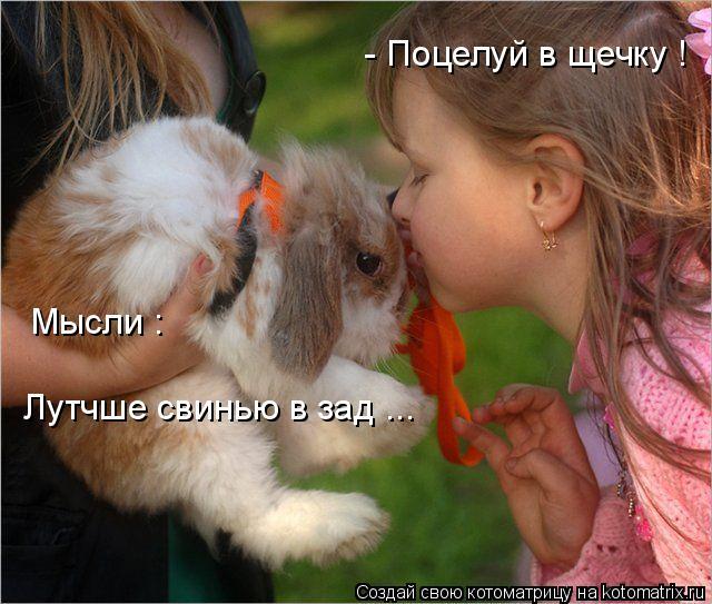 Котоматрица: - Поцелуй в щечку ! Мысли : Лутчше свинью в зад ...