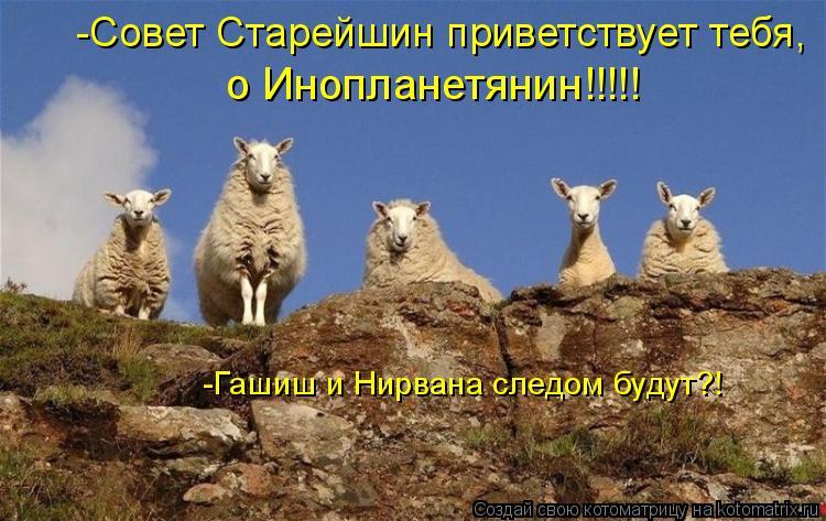 Котоматрица: о Инопланетянин!!!!! -Гашиш и Нирвана следом будут?! -Совет Старейшин приветствует тебя,