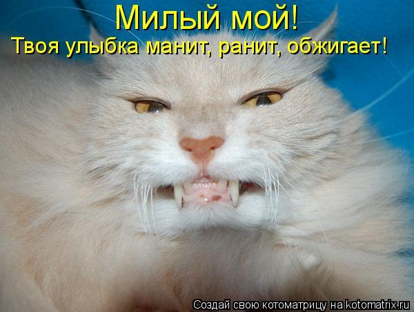 Котоматрица: Милый мой!  Твоя улыбка манит, ранит, обжигает!