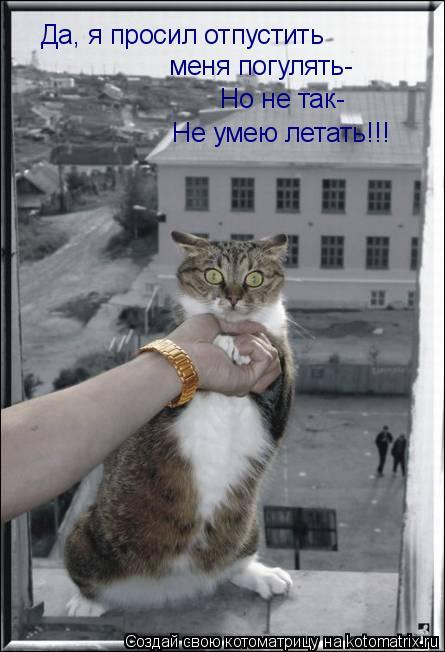 Котоматрица: Да, я просил отпустить  меня погулять- Но не так- Не умею летать!!!