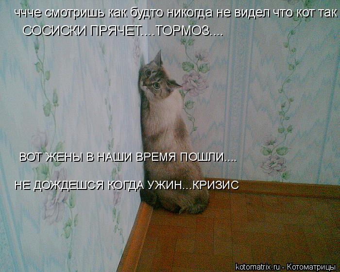 Котоматрица: ччче смотришь как будто никогда не видел что кот так соски прячет тормоз....   СОСИСКИ ПРЯЧЕТ....ТОРМОЗ.... ВОТ ЖЕНЫ В НАШИ ВРЕМЯ ПОШЛИ.... НЕ ДОЖД