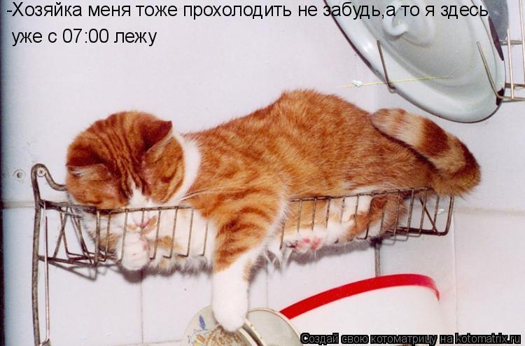 Котоматрица: -Хозяйка меня тоже прохолодить не забудь,а то я здесь  -Хозяйка меня тоже прохолодить не забудь,а то я здесь  уже с 07:00 лежу  уже с 07:00 лежу