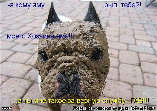 Котоматрица: -я кому яму                               рыл, тебе?! ..моего Хозяина яма!!! ...а ты мне такое за верную службу...ГАВ!!!
