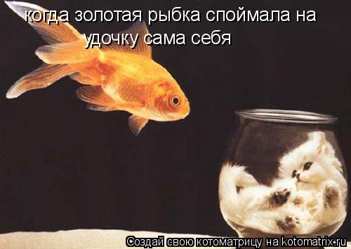 Котоматрица: когда золотая рыбка споймала на  удочку сама себя