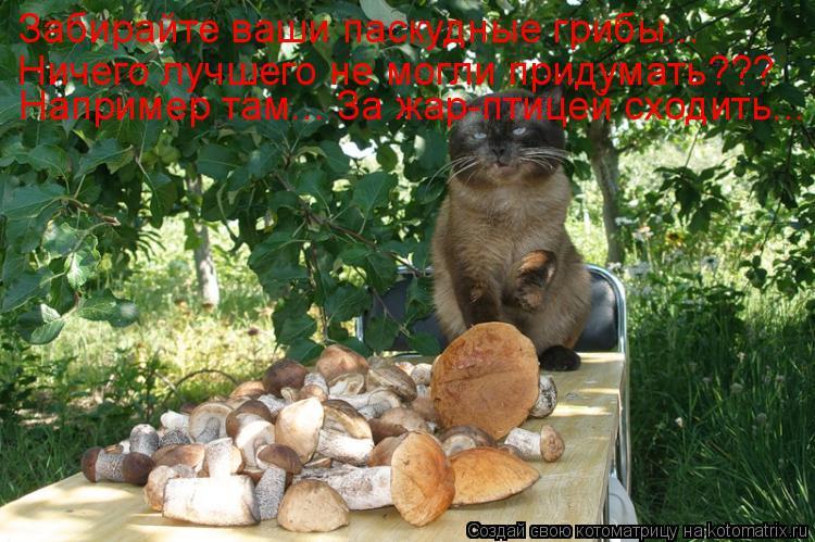 Котоматрица: Забирайте ваши паскудные грибы...  Ничего лучшего не могли придумать??? Например там... За жар-птицей сходить...