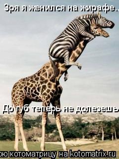 Котоматрица: Зря я женился на жирафе... До губ теперь не долезешь