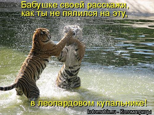 Котоматрица: Бабушке своей расскажи,  как ты не пялился на эту,  в леопардовом купальнике!
