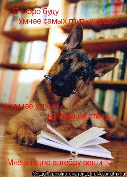 Котоматрица: Я скоро буду Умнее самых глупых кошек! А умнее умных -  никогда не стану... Мне впадло алгебру решить!