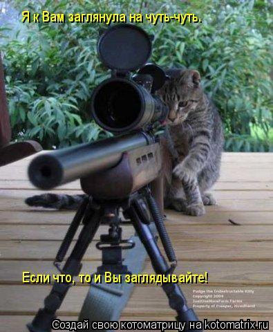 Котоматрица: Я к Вам заглянула на чуть-чуть. Если что, то и Вы заглядывайте!