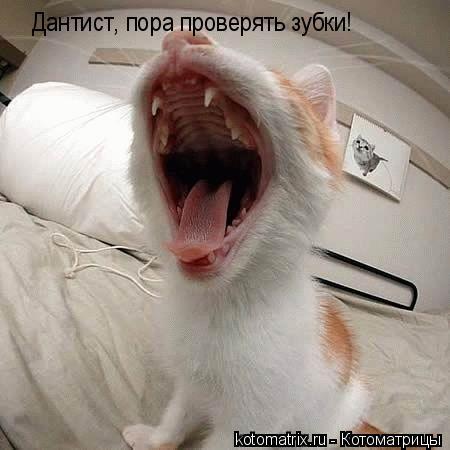 Котоматрица: Дантист, пора проверять зубки!
