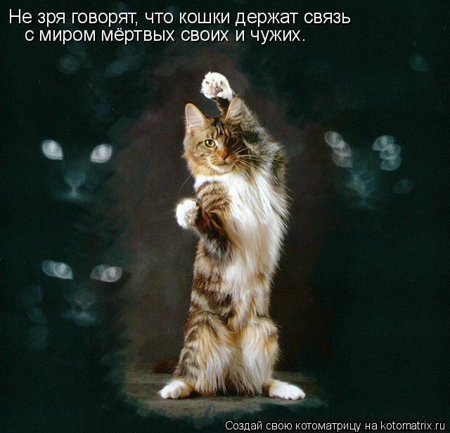 Котоматрица: Не зря говорят, что кошки держат связь  с миром мёртвых своих и чужих.