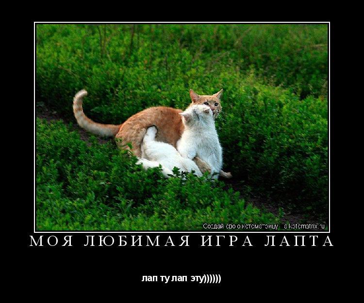 Котоматрица: моя любимая игра ЛАПТА лап ту лап эту))))))