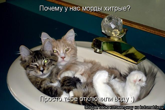 Котоматрица: Почему у нас морды хитрые? Просто тебе отключили воду :)